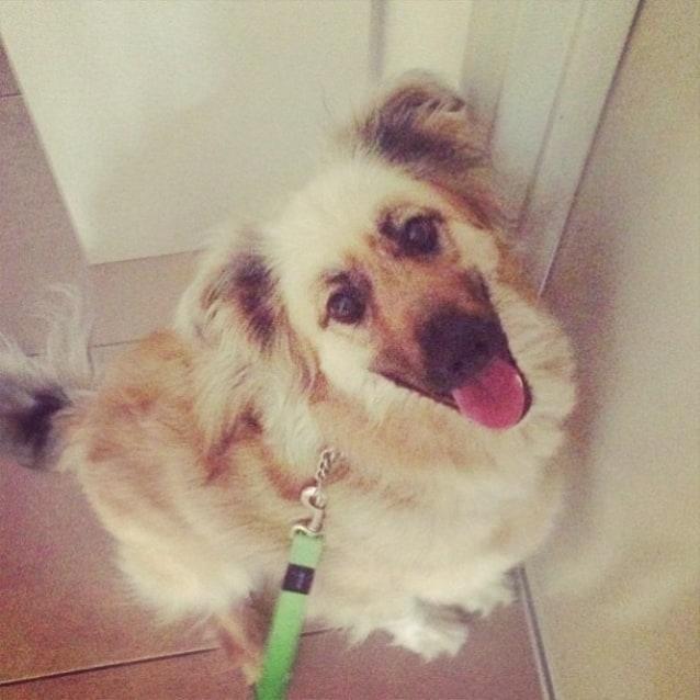 Photo of Ozzy