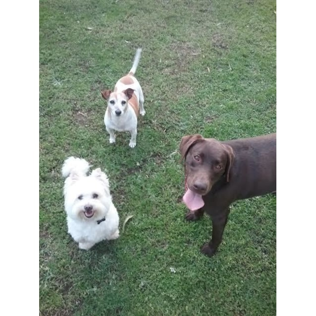 Photo of Harvey & Lucky (Looking For Home Together)