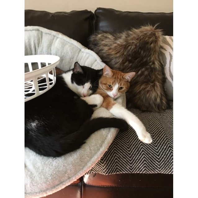Photo of Percy & Splotch Brothers (Located In Frankston)