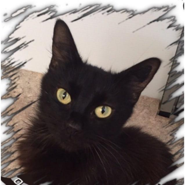 Photo of Rescue A Cat Inc.  Rosie