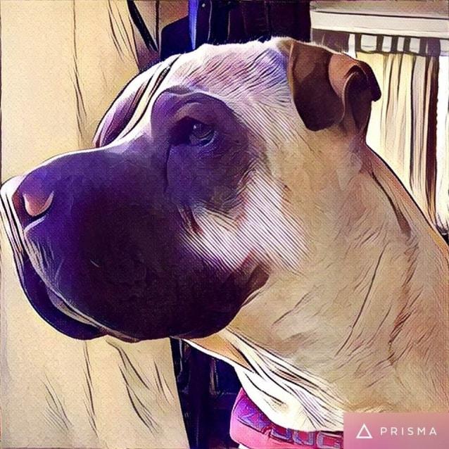 Photo of Romeo