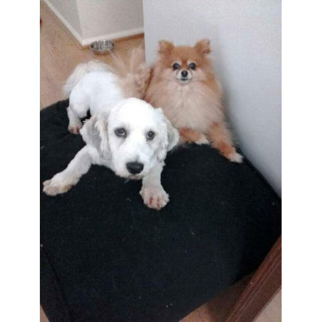 Photo of Rocky (Cat/Dog/Child Friendly)