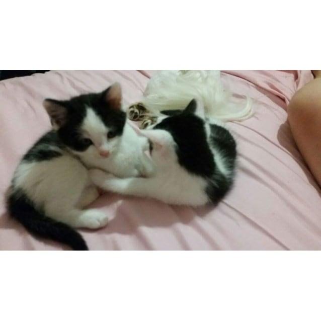 Photo of Malakai (Cat/Child/Dog Friendly)