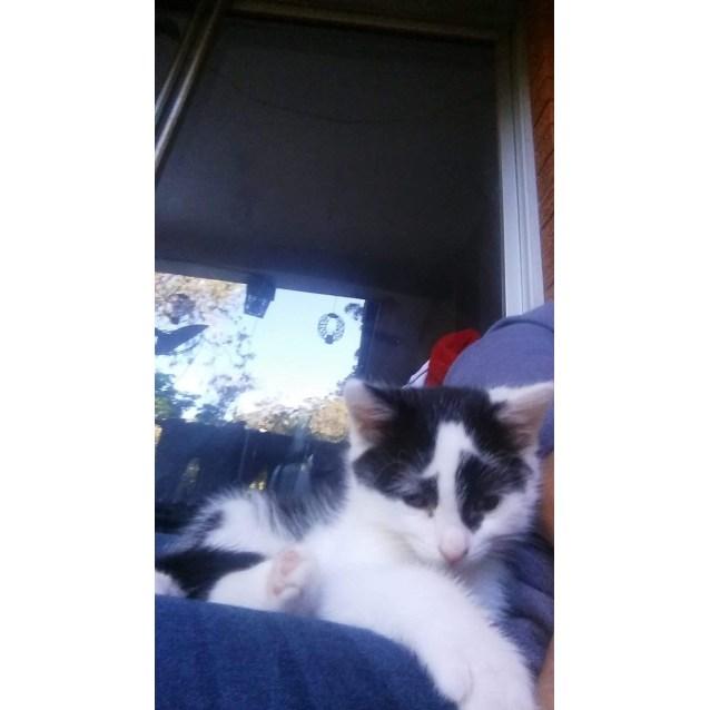 Photo of Drew (Cat/Child/Dog Friendly)