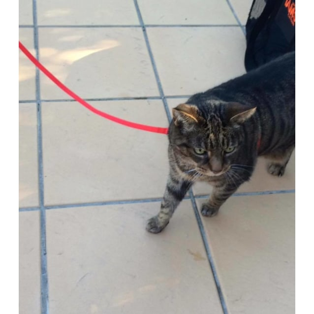 Photo of Tiger (Located In Watsonia)