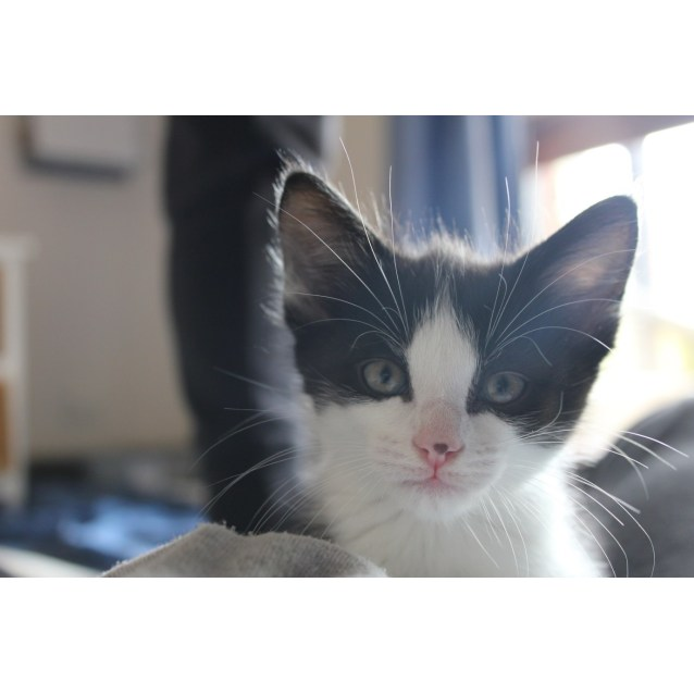 Photo of Pippin (On Trial In New Home)