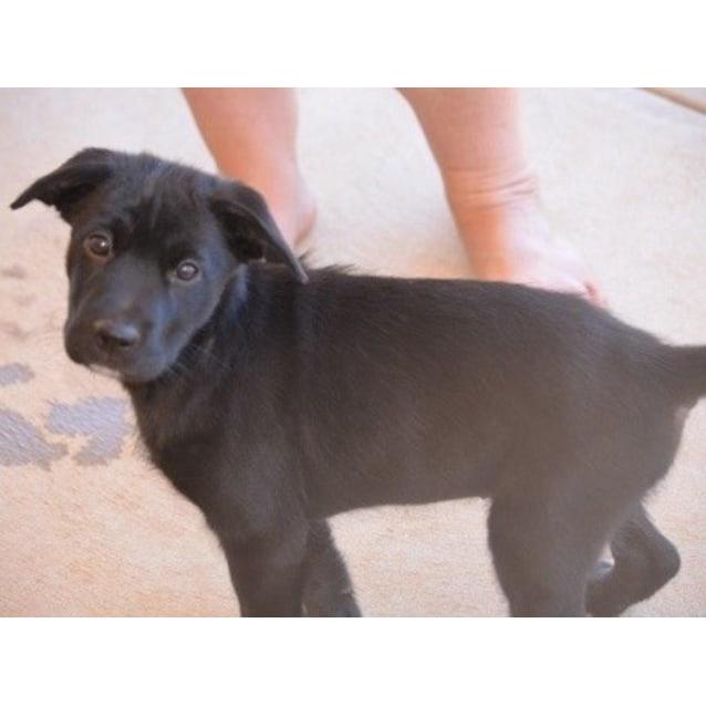 Photo of Blacknee   Cd0098 *Adoption Pending*