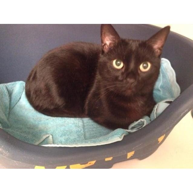 Photo of Puss (4635)