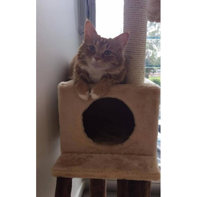 Photo of Ginger (Located In Brighton)