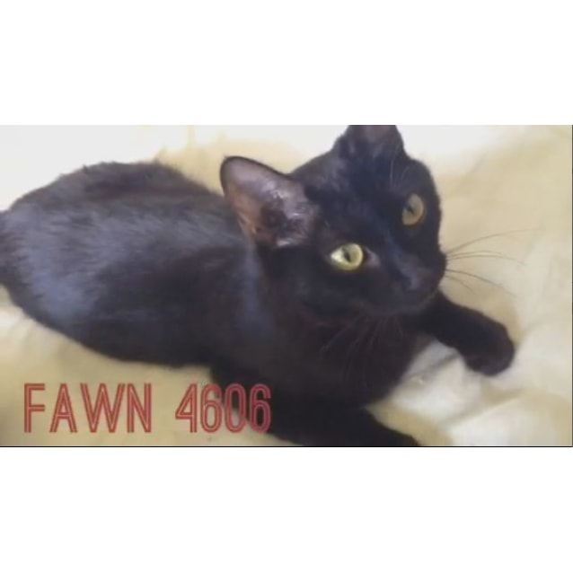 Photo of Fawn (4606)