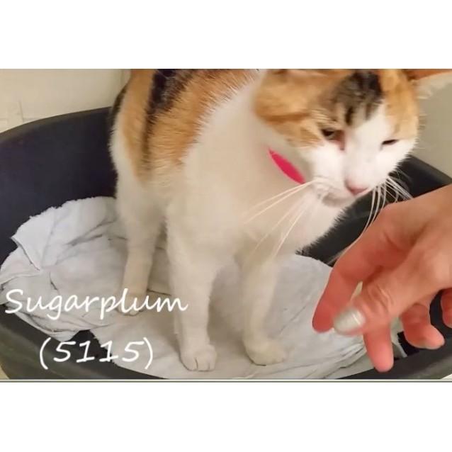 Photo of Sugarplum (5115)