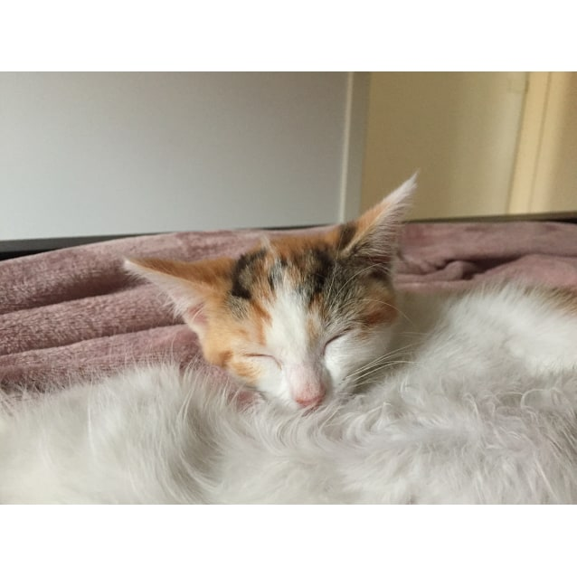 Photo of Tigra