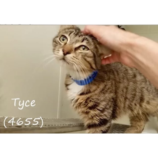 Photo of Tyce (4655)
