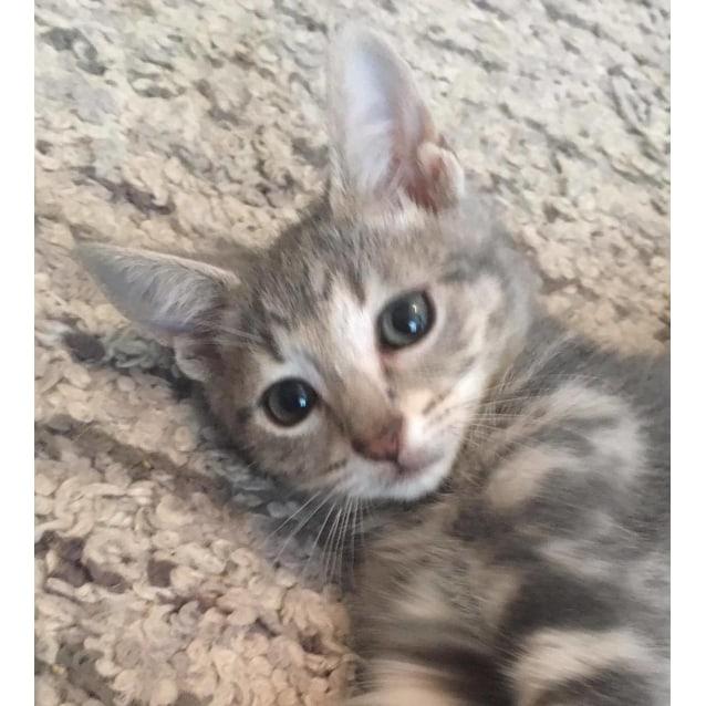 Photo of Lewis (Kid And Cat Exposure)