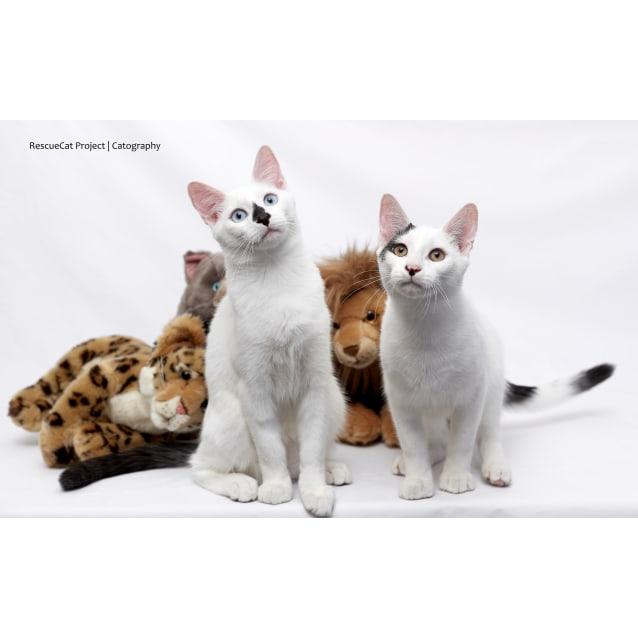 Photo of Lenny The Loveable Kitten
