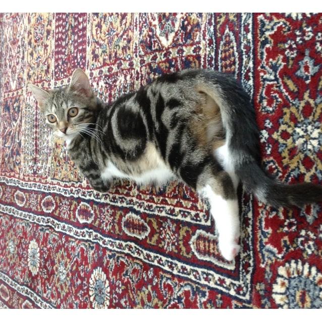 Photo of Beth @ The Pet House, Tuggerah