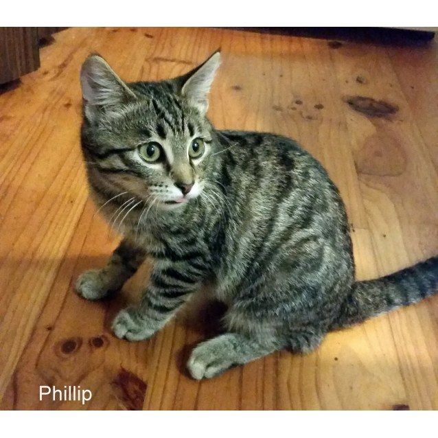 Photo of Phillip (Located In Beaufort)