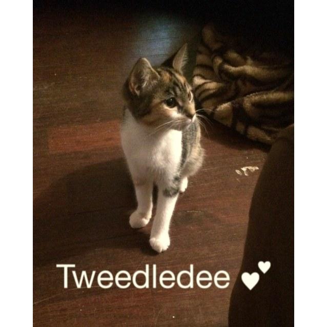 Photo of Tweedledee