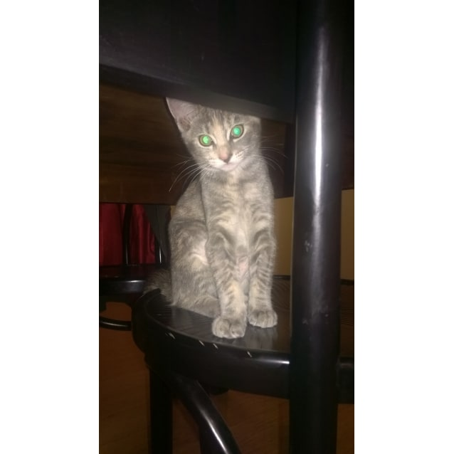 Photo of Violet (Located In Carlton)