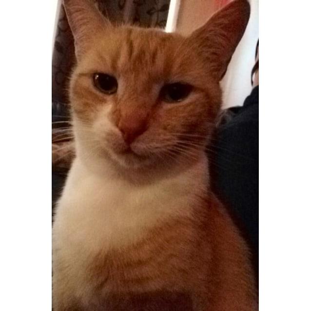 Photo of Tigger (0482)