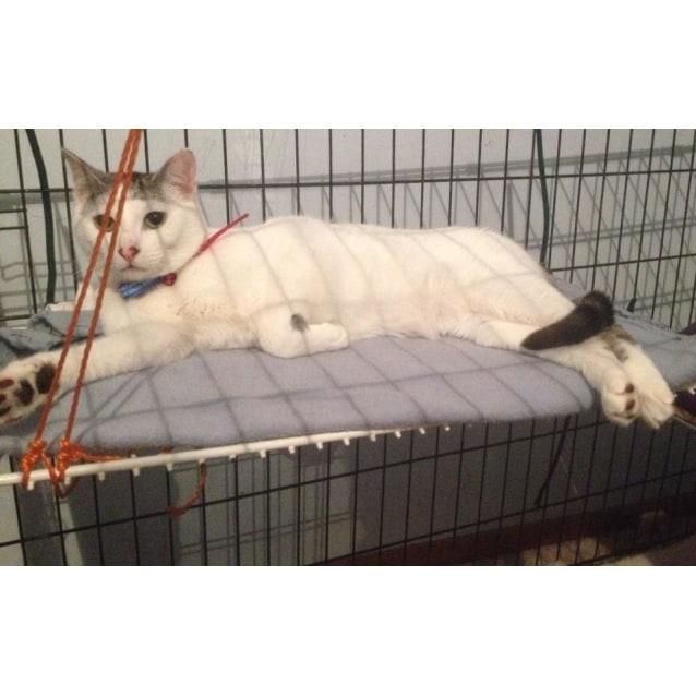 Photo of Zimba (In Geelong) | $50 Adoption Fee