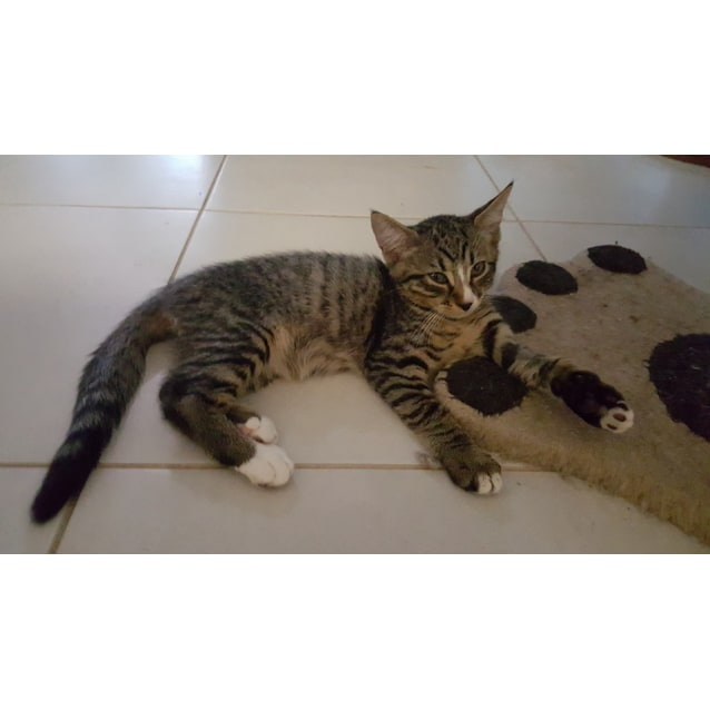 Photo of Cecil