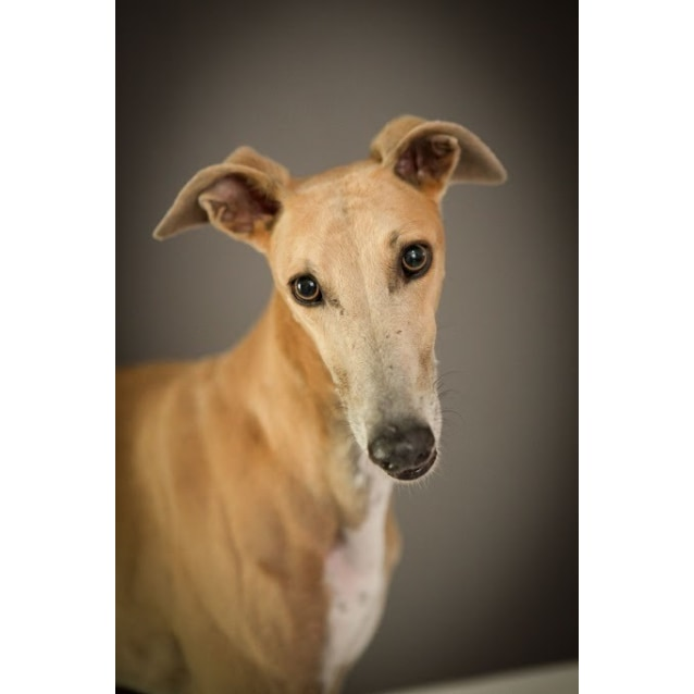 "Photo of ""Molly"", Lovely Lady. Brisbane"