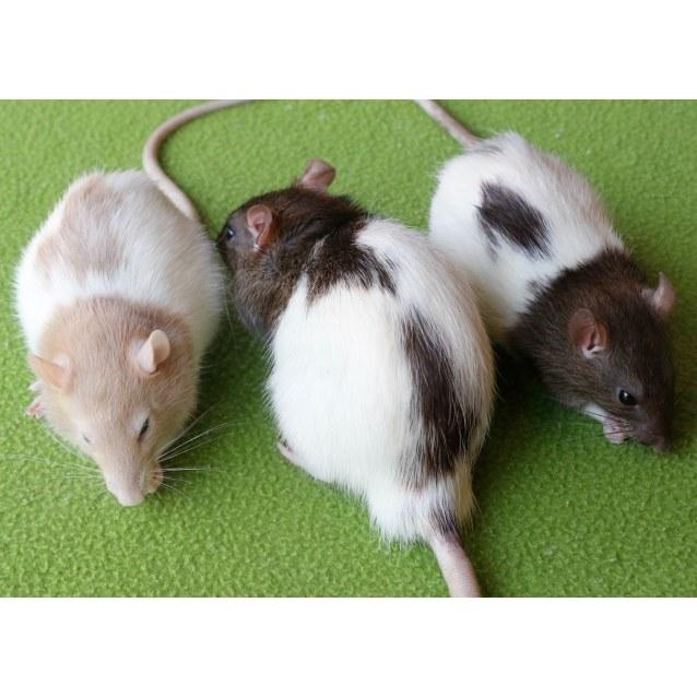 Photo of Gilbert, Roger & Finn