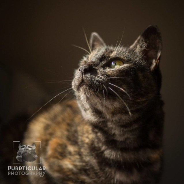 Photo of Beautiful Bonnie