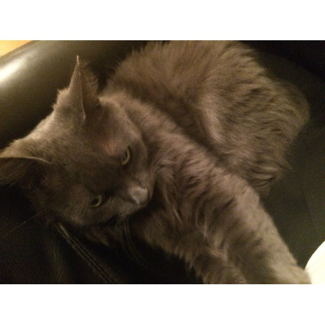Photo of Lilah   (Located In Montmorency)