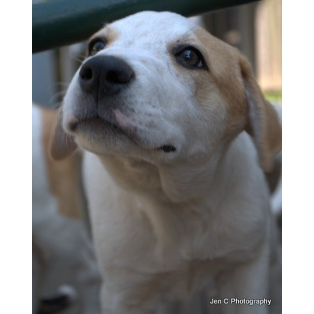 Photo of Frankie A Gorgeous Puppy