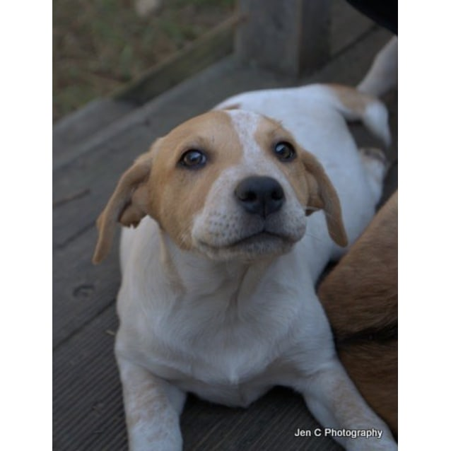 Photo of Daisy The Adorable Puppy