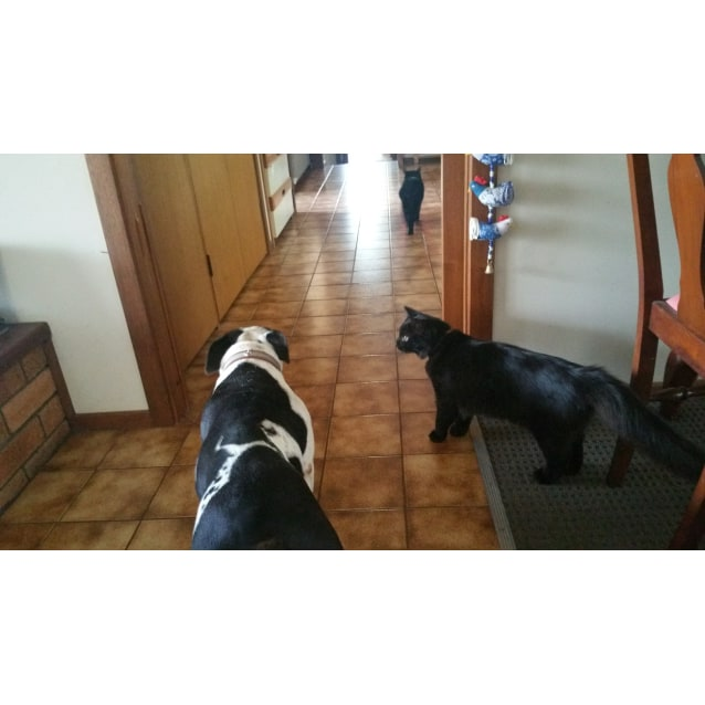Photo of Zarli... Cat, Dog And People Friendly