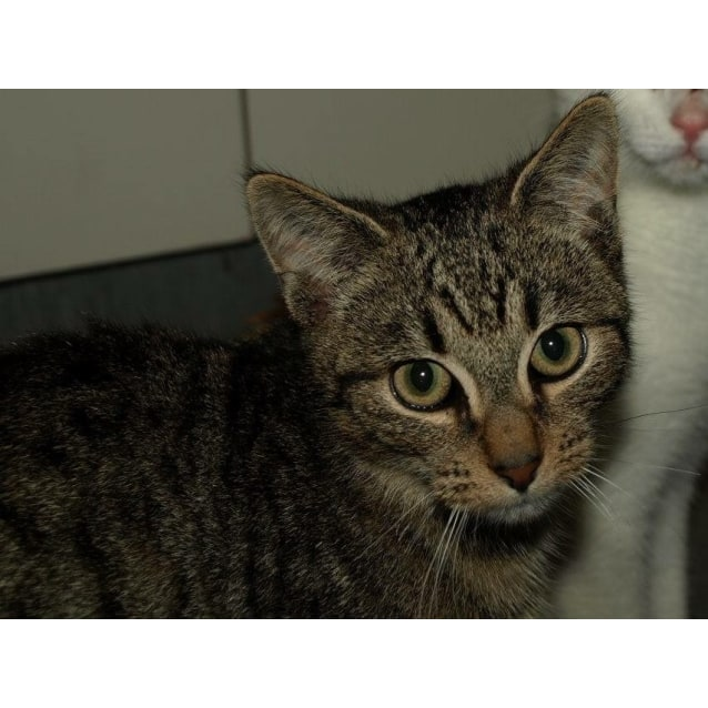 Photo of Buzzda Kitten