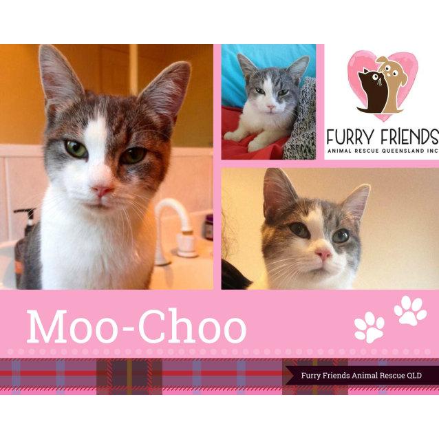 Photo of Moo Choo