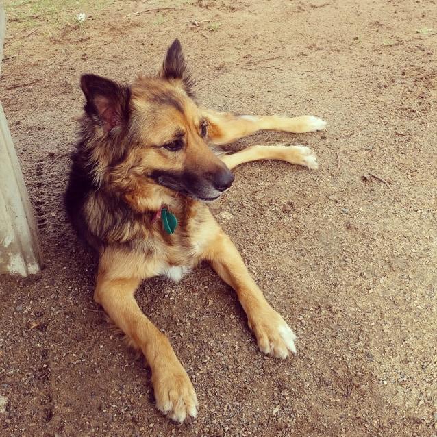 Photo of Koda **Adopted**