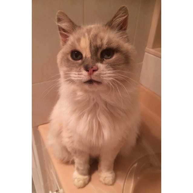 Photo of Cinders * On Trial With Her New Family