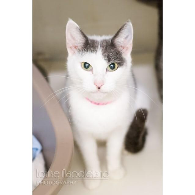 Photo of Annie (2444)