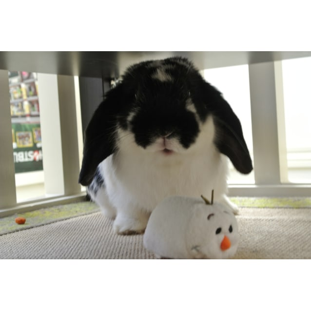 Photo of Benjamin Bunny