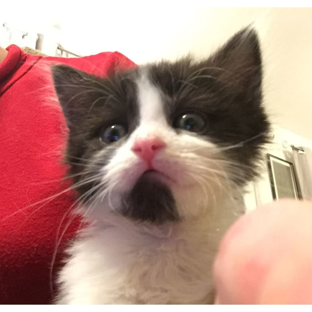 Photo of Chin Chin The Orphan Kitten