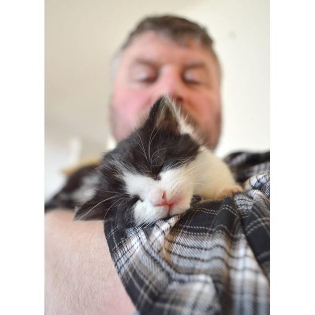 Photo of Panda The Orphan Kitten