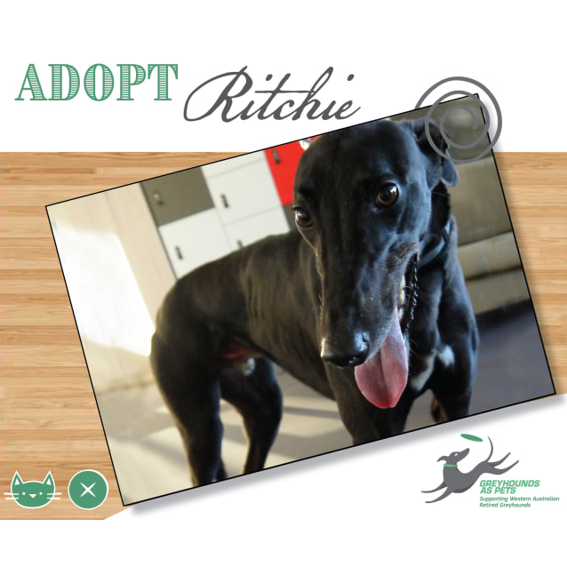 Photo of Ritchie (Pending)