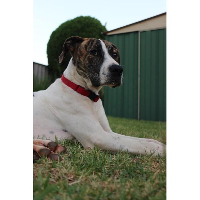 Photo of Django