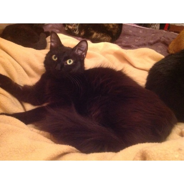 Photo of Queenie * Adopted By Her Foster Carer *