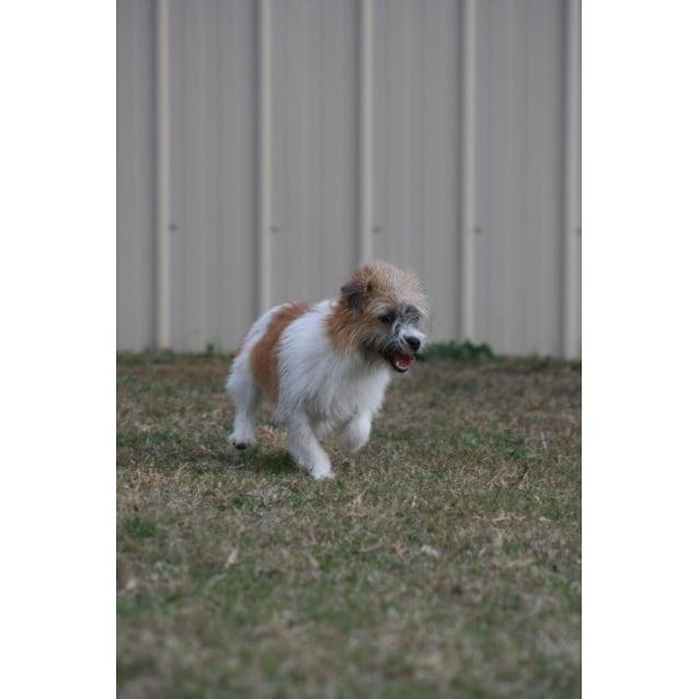 Photo of Daisy Mae
