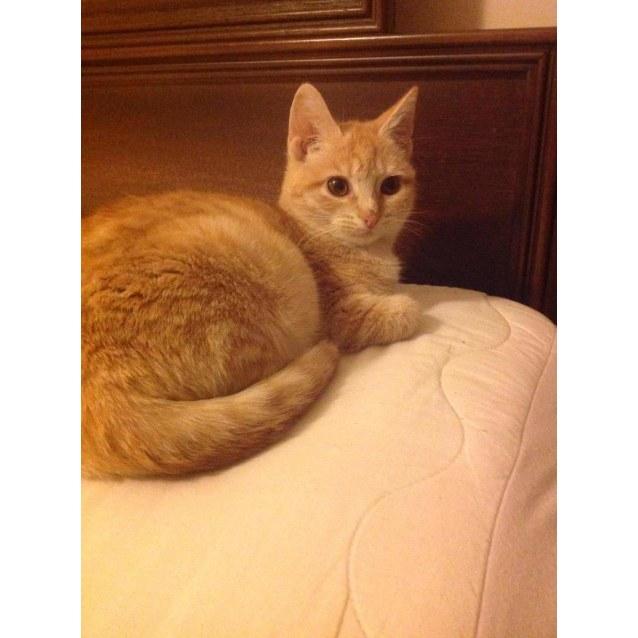 Photo of Neville