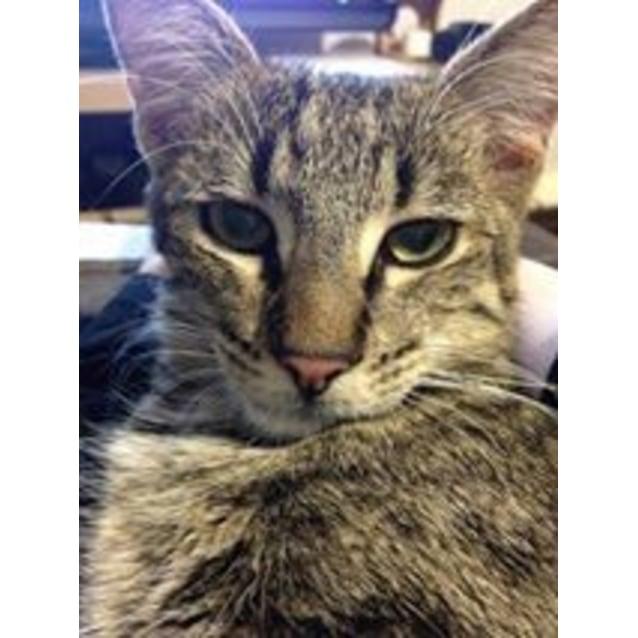 Photo of Milo Kitten