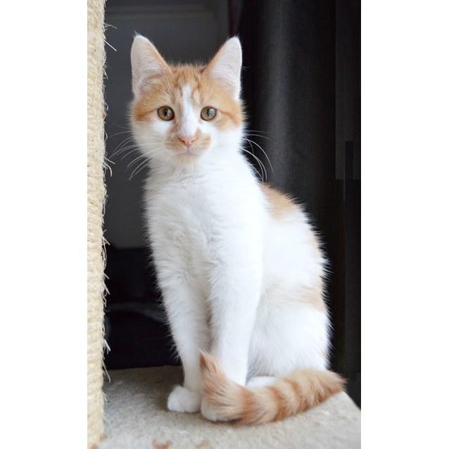 Photo of Hugo The Handsome Kitten