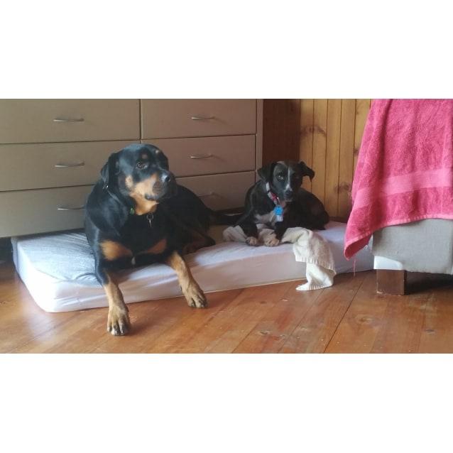 Photo of Minnie Mae   Cat, Dog, & Child Friendly.