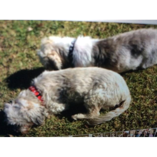 Photo of Monty & Mia
